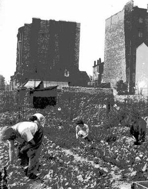 A permanência da produção hortícola nos jardins operários em Suresnes, periferia parisiense, em 1943 [LE GOFF, Jacques. Por amor às cidades. São Paulo, Editora UNESP, 1998, p. 31]