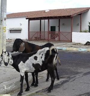 Outros habitantes de Caraíba <br />Foto Ana Carolina Bierrenbach