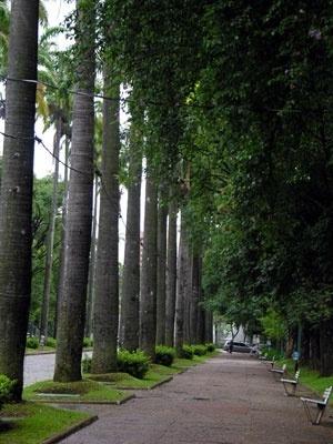 Praça da Liberdade. Passeio ao lado da alameda das palmeiras imperiais<br />Foto Benedito Tadeu de Oliveira