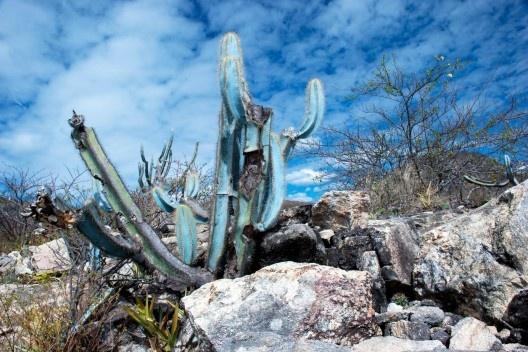 Parque Estadual da Pedra Azul, Rota do Lagarto ES<br />Foto José Tabacow