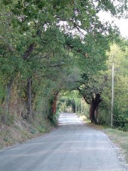 Exemplo típico de uma via rural arborizada, uma potencialidade para qualificar as conexões verdes no município.<br />Foto M. Bocci
