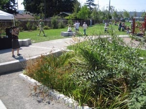 Fotografia de um jardim de chuva em Oxbow Regional Park – Portland – Oregon – Estados Unidos