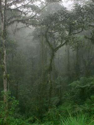 Floresta no Equador.  [World Rainforest Movement]