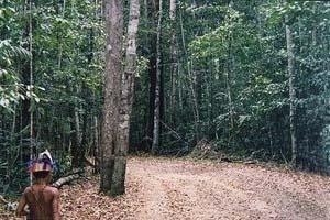 Reserva indígena dos Pataxós, Brasil.  [World Rainforest Movement]