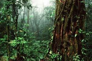 Bosque tropical de Niebla, Reserva de Santa Elena, Costa Rica. <br />Foto Félix Grande.  [WWF Centroamérica]