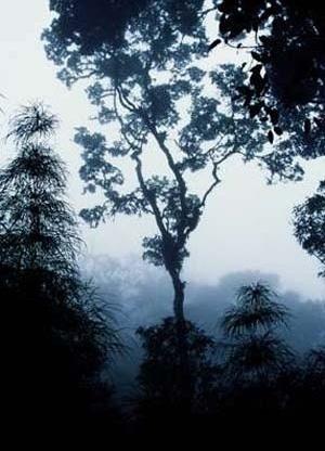 Niebla, Bosque tropical de montaña, Parque Nacional Chirripó, Costa Rica. <br />Foto Félix Grande.  [WWF Centroamérica]