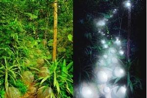 Esférica. Esferas, de dia e à noite, em meio à vegetação existente na linha de drenagem