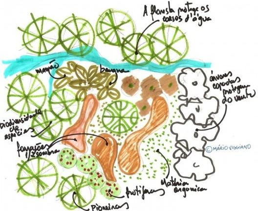 Esquema de agrofloresta<br />Elaboração Mário Hermes Stanziona Viggiano