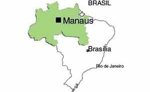 Figura 1 – Mapa do Brasil e a região norte do país, que abrange a Amazônia brasileira<br />Desenho Mirian Keiko Ito Rovo
