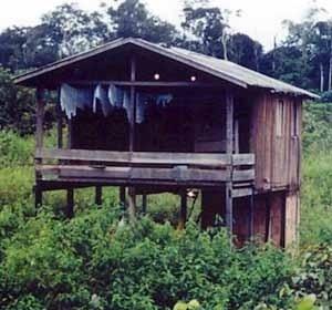 Figura 4 – Casa de caboclo em terra firme, elevada do solo para que o ar circule por todos os lados e proteja a casa da entradas dos animais<br />Foto Beatriz Santos Oliveira